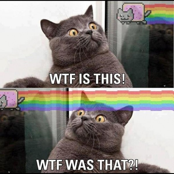 shocked surprised act animal lolcat nyan you tube wtf is this that funny pics pictures pic picture image photo images photos lol