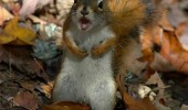 angry shocked surprised squirrel animal gimmie my nuts funny pics pictures pic picture image photo images photos lol