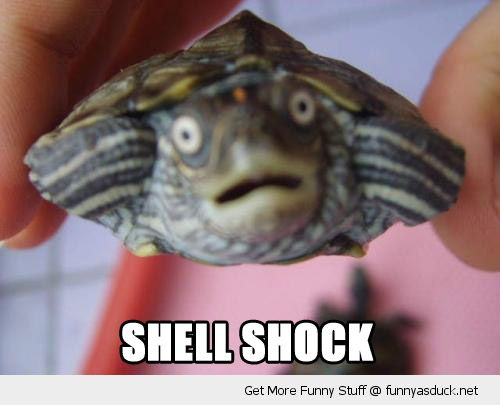 shocked surprised turtle animal tortoise scared face shell shock funny pics pictures pic picture image photo images photos lol