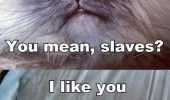 sinister evil grumpy angry cat lolcat humans slaves i like you sort of funny pics pictures pic picture image photo images photos lol
