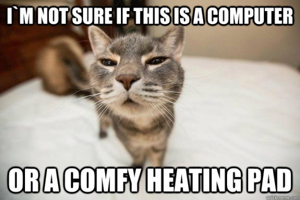 skeptical confused cat lolcat animal not sure computer comfy heating pad laptop funny pics pictures pic picture image photo images photos lol