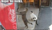 cat animal lolcat soda can machine no milk only water funny pics pictures pic picture image photo images photos lol