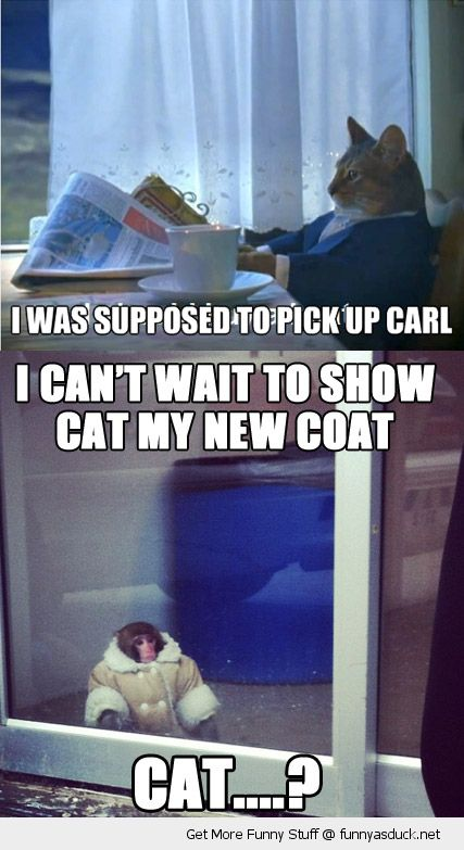 sophisticated cat lolcat animal paper pick up carl cute monkey waiting window new coat jacket  funny pics pictures pic picture image photo images photos lol