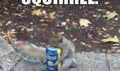 squirrel animal holding beer can go home drunk funny pics pictures pic picture image photo images photos lol