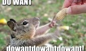 happy excited squirrel reach nut do want animal funny pics pictures pic picture image photo images photos lol