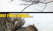 first i was like then squirrel eating bird animal snow funny pics pictures pic picture image photo images photos lol