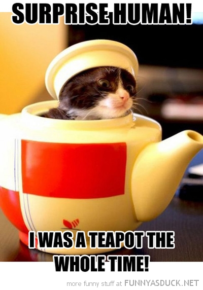 cute cat kitten lolcat animal surprise human teapot whole time funny pics pictures pic picture image photo images photos lol