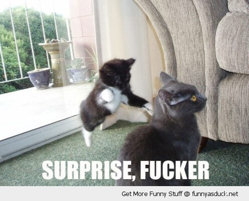 surprise mother fucker cat kitten animal attacking mom jump funny pics pictures pic picture image photo images photos lol