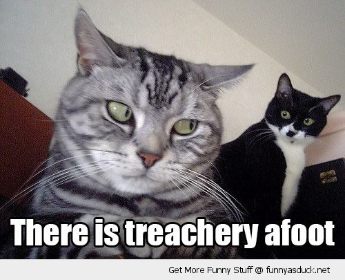 suspicious cat lolcat grumpy fight treachery afoot animal funny pics pictures pic picture image photo images photos lol
