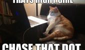 thats right girl fat cat lolcat animal laptop computer porn chase that dot funny pics pictures pic picture image photo images photos lol