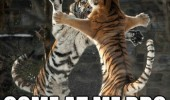 tigers animals snow fighting come at me bro zoo funny pics pictures pic picture image photo images photos lol