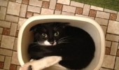 cat kitten lolcat animal trash can bin so trashed right now funny pics pictures pic picture image photo images photos lol
