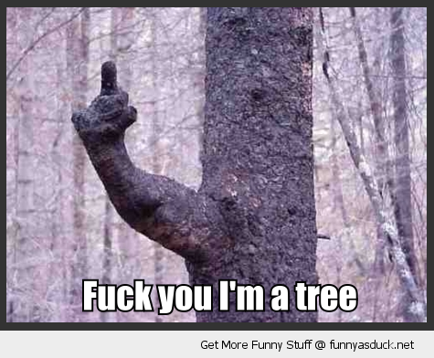 tree branch hand finger arm fuck you i'm a tree wood forest funny pics pictures pic picture image photo images photos lol