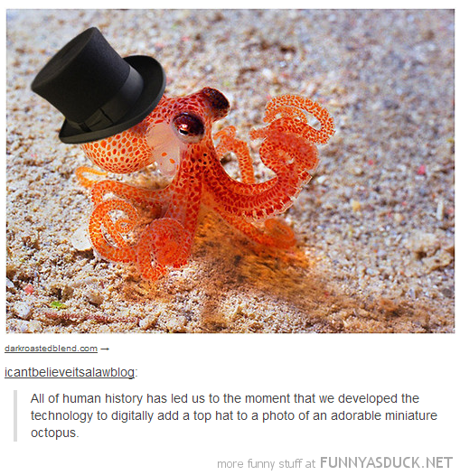 tumblr comment technology advanced digitally place top hat miniature octopus animal funny pics pictures pic picture image photo images photos lol