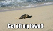 angry grumpy turtle tortoise beach animal sea get of my lawn funny pics pictures pic picture image photo images photos lol