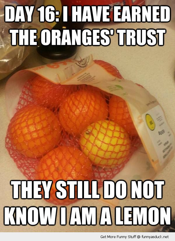 undercover fruit gained oranges trust lemon in bag food funny pics pictures pic picture image photo images photos lol