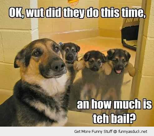 cute dog puppys in jail stuck door room animal what did they do now much is bail funny pics pictures pic picture image photo images photos lol