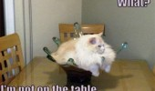 cat lolcat animal sitting glass bowl vase what not on table funny pics pictures pic picture image photo images photos lol