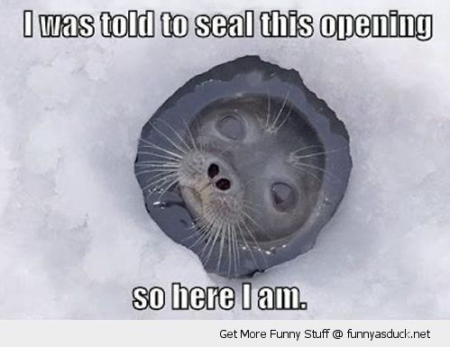 told to seal this opening ice hole snow antartic pun joke animal cute funny pics pictures pic picture image photo images photos lol