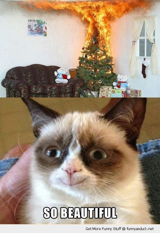 angry grumpy cat lolcat animal happy smiling buring fire xmas christmas tree beautiful holidays funny pics pictures pic picture image photo images photos lol