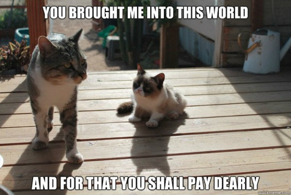 cute angry grumpy cat kitten brought me into world pay dearly animal funny pics pictures pic picture image photo images photos lol