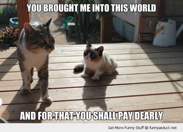 Young Grumpy Cat