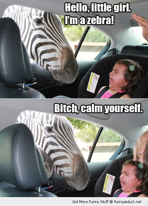zebra sticking head through window scared crying kid little girl screaming bitch calm yourself animal funny pics pictures pic picture image photo images photos lol