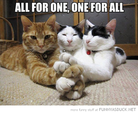musketeer cats lolcats animals holding paws all for one funny pics pictures pic picture image photo images photos lol