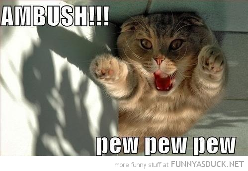 ambush pew cat lolcat animal funny pics pictures pic picture image photo images photos lol