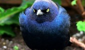 angry bird animal bluebird happiness not happy funny pics pictures pic picture image photo images photos lol