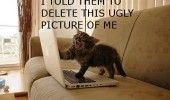 angry cat lolcat animal laptop computer pc told them remove ugly funny pics pictures pic picture image photo images photos lol