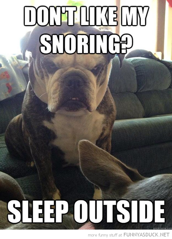 angry grumpy dog animal don't like snoring sleep outside funny pics pictures pic picture image photo images photos lol