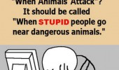 animals attack show meme stupid people dangerous funny pics pictures pic picture image photo images photos lol
