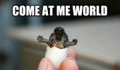 cute baby turtle animal egg come at me world funny pics pictures pic picture image photo images photos lol