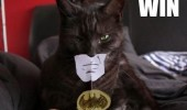 batman cat lolcat animal paper face win funny pics pictures pic picture image photo images photos lol