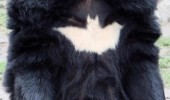 bear animal batman logo chest fur batbear funny pics pictures pic picture image photo images photos lol