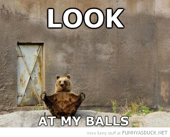 bear sitting holding paws feet animal look at my balls funny pics pictures pic picture image photo images photos lol