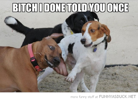 bitch told you dog animal slap punch face funny pics pictures pic picture image photo images photos lol