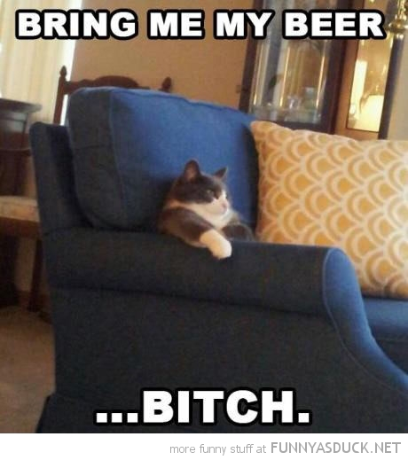 bring me beer bitch cat lolcat animal sitting couch sofa funny pics pictures pic picture image photo images photos lol