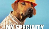 dog animal builder hard hat specialty roofing funny pics pictures pic picture image photo images photos lol