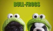cute bulldogs animals frog hats bullfrogs funny pics pictures pic picture image photo images photos lol