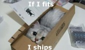 cat lolcat animal box if i fits ships funny pics pictures pic picture image photo images photos lol