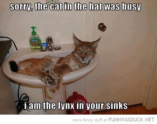 cat hat bust lynx sinks animal bathroom lying funny pics pictures pic picture image photo images photos lol