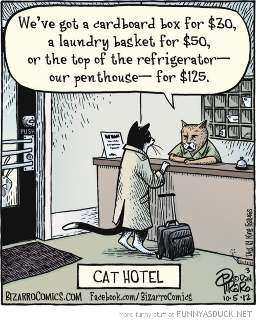 cat lolcat animal hotel comic funny pics pictures pic picture image photo images photos lol