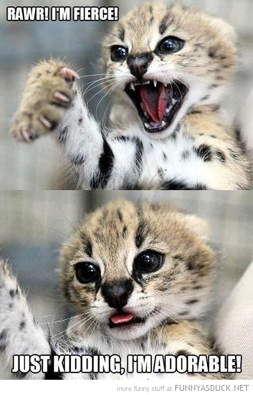 cat kitten cub roaring fierce animal just kidding adorable funny pics pictures pic picture image photo images photos lol
