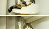cat leg air look at it animal lolcat funny pics pictures pic picture image photo images photos lol