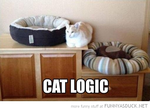 cat lolcat animal lying unit between beds logic funny pics pictures pic picture image photo images photos lol