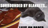 cat logic animal lolcat surrounded blankets lay paper bed funny pics pictures pic picture image photo images photos lol