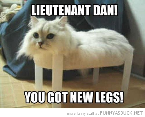 cat lolcat animal no legs lieutenant dan new legs forrest gump funny pics pictures pic picture image photo images photos lol