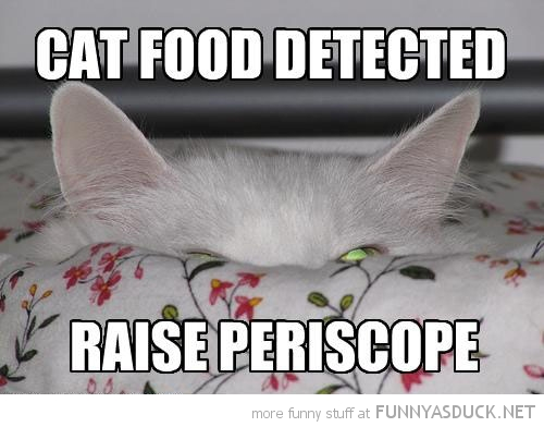 cat peeking hiding food detected animal lolcat periscope funny pics pictures pic picture image photo images photos lol